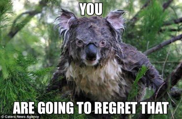 Fury of the Storm Koala